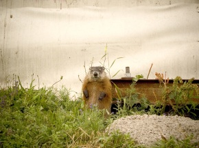 On Groundhogs & Expectations