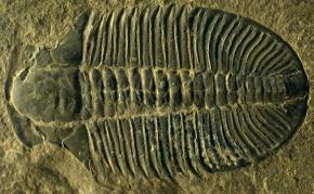 On Pint-Sized Paleontologists