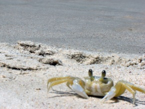 On an Impromptu CrabHunt